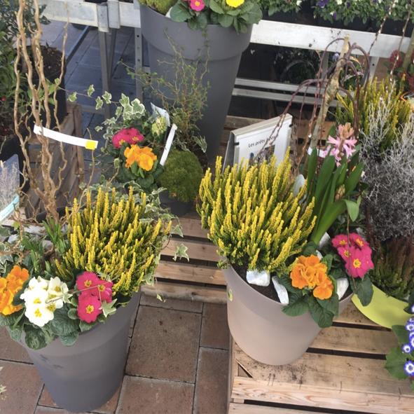 Composition-florale-pret-à-planter