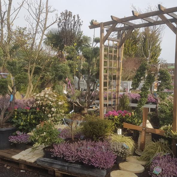 Jardin-pépinière