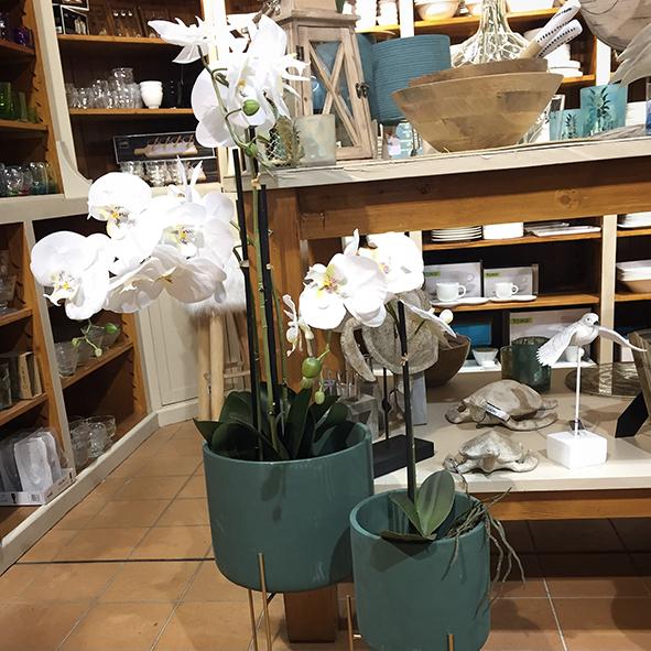 Orchidée-et-pot