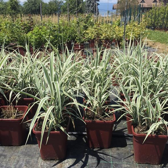 Pepiniere-plantes-vertes