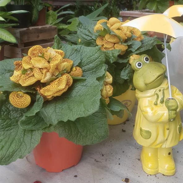 Plante-d'intérieur-et-grenouille