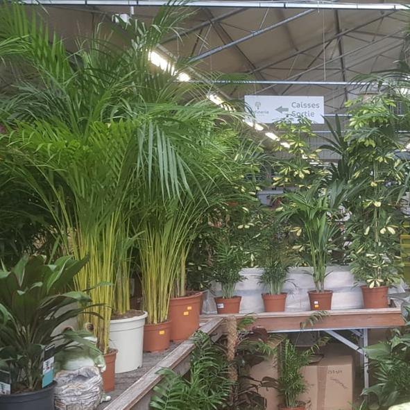 Plantes-verte-d'intérieur-