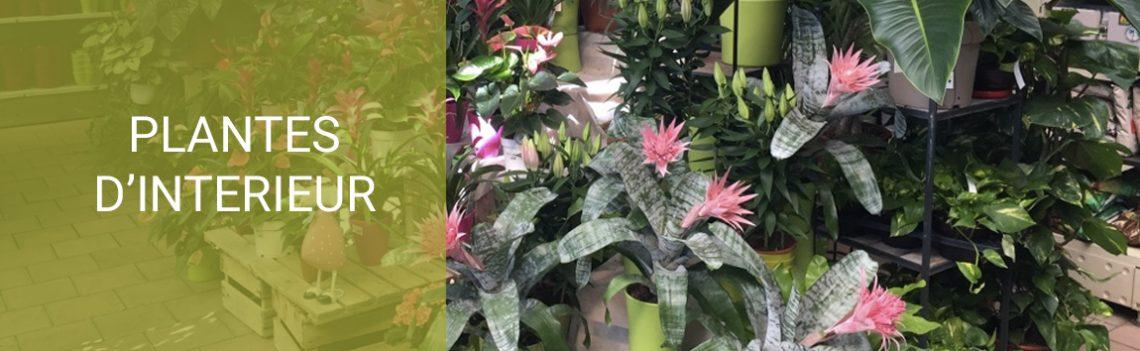 Bannières-plantes-d'intérieur-V2